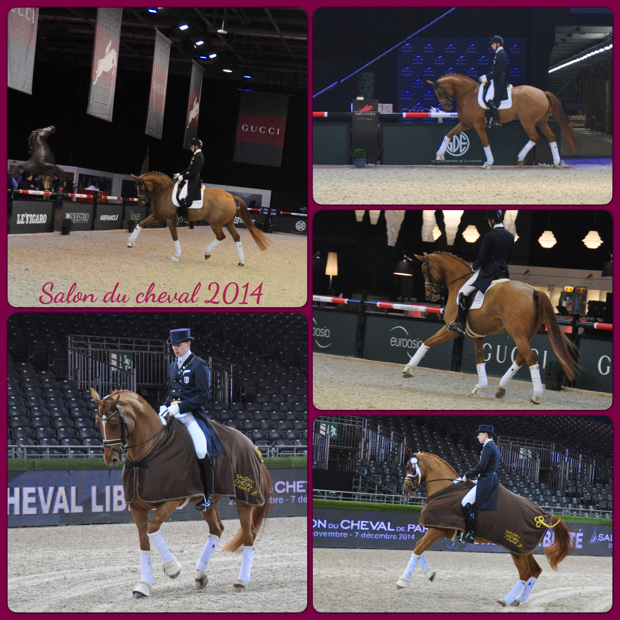 Sellerie alegria le sp cialiste du mat riel d 39 quitation de dressage online - Salon du cheval 2014 paris ...