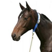 Collier pour cheval